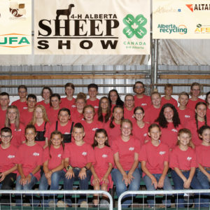 4-H Alberta Sheep Show